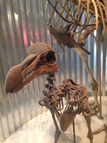 birdlike-dinosaur