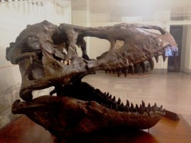 national-t-rex