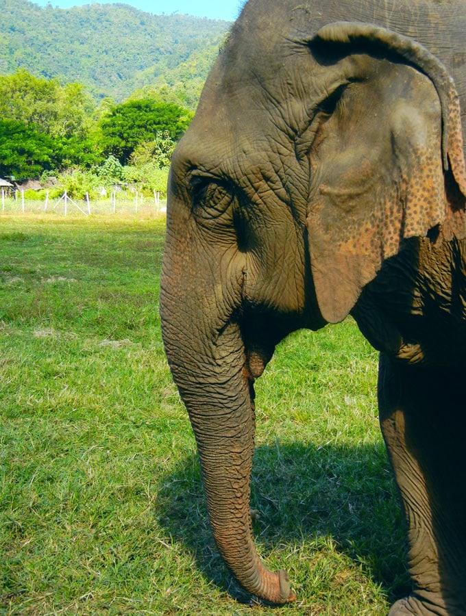 Review of Elephant Nature Park