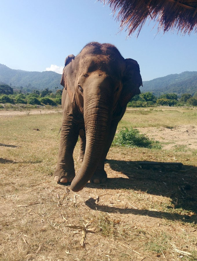 Visiting Elephant Nature Park