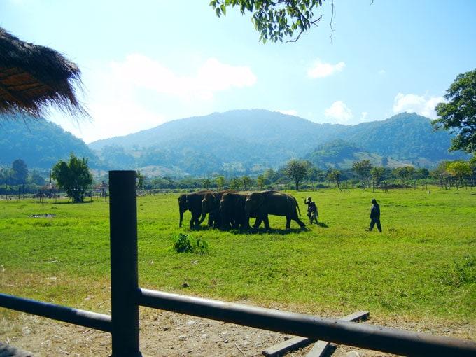 Beautiful Chiang Mai Elephant Nature Park