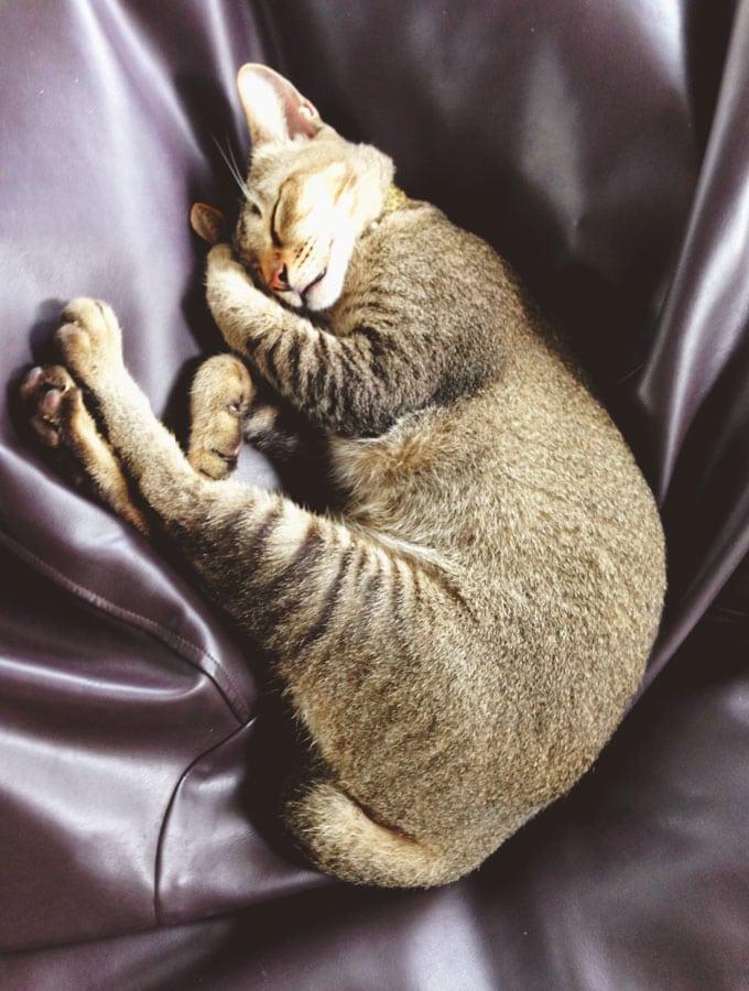 drunken-sailor-cats