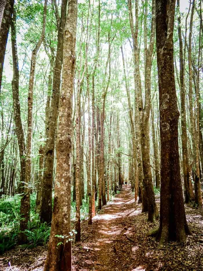 Things to Do on Maui: Makawao Forest Reserve - Running on Real Food