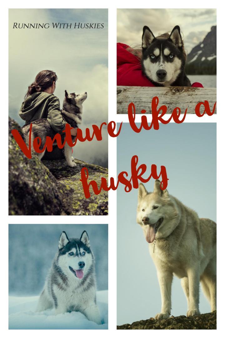 Venture like a husky