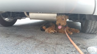Enjoying the shade under the car in Alabama