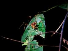 During our night hike we saw SO many crazy spiders
