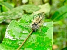 The most bad ass caterpillar ever
