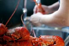 crayfish_kreef_runnybabbitcrafaj