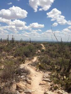 Hiking, Sabino Canyon, Tucson, Arizona, springtime