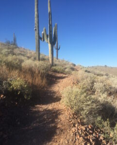 Ragnar, McDowell Mountain, Arizona, Trail Run, red loop, hills