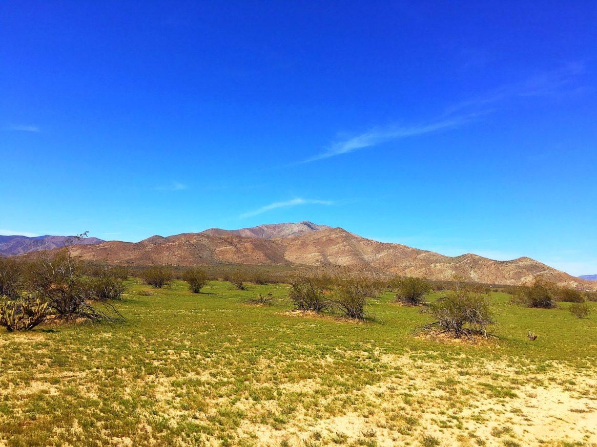 Old West 50k, ultra running, trail run, desert run