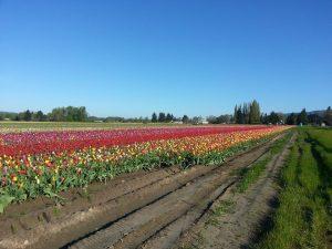 Blooms to Brews 10k Photo Credit: Amber Corsen