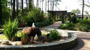 Cape Fear Botanical Garden Photo Credit: Amber Corsen
