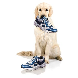 dog-gone-run