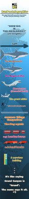 Infographic: How Big is Megalodon?