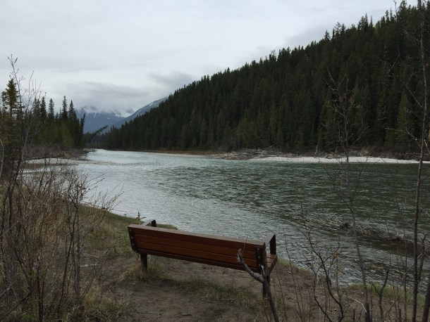 Canmore trail May 17 2015