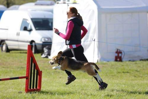 Dog Agility - Laura Johnson