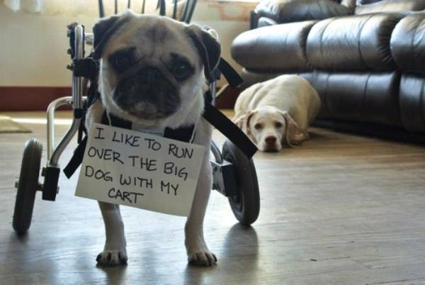 Dog Shaming Funniest Pictures