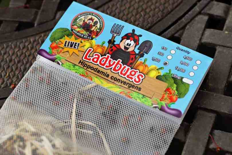 live ladybugs for your garden