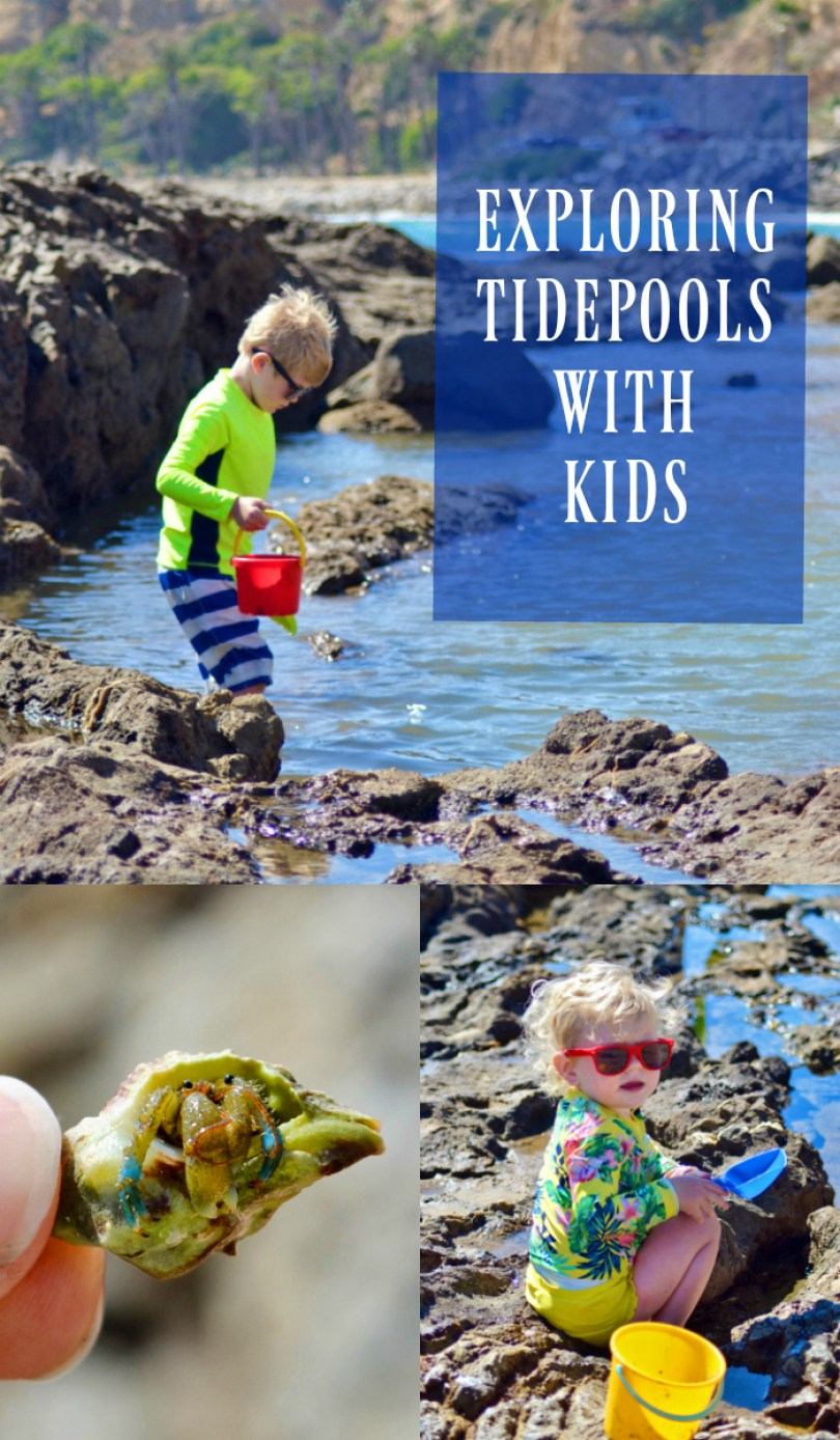 Exploring Tide pools with Kids