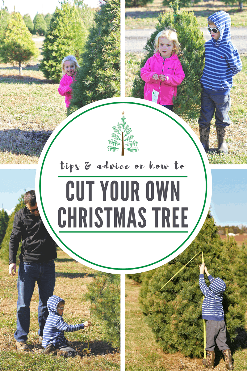 cut your own christmas tree durham