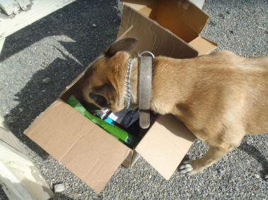 Citta in care package box