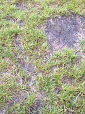 hard, patchy backyard soil