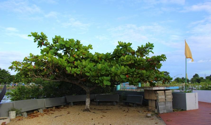 Day 4: Part II – South Trinidad