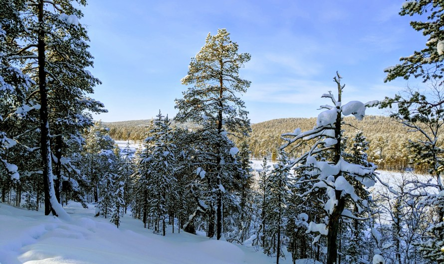 Winter Wonderland – Part 2