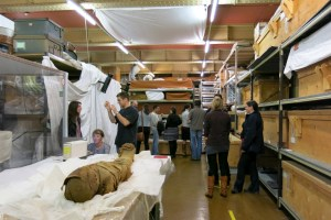 SCC Hall 1, emptied for Collections People Stories, during Petrie study day