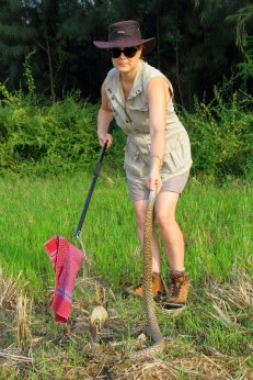 Diana Barr working with an Indian cobra. This beautiful snake is one of India's 'Big Four' and is responsible for thousands of deaths every year in India. Rupi Mangat Read