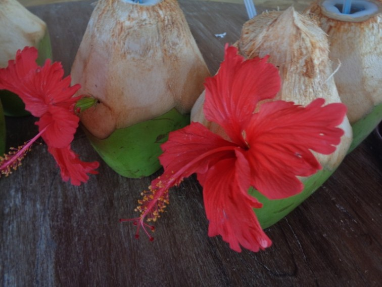 Coconut to drink - healthy by the ocean Picture copyright Rupi Mangat