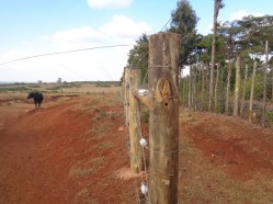 Fence at Marmanet forest and the farms to keep elephants from straying out - copyright Rupi Mangat