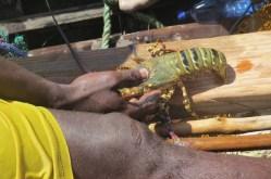 Local fisher with lobster near Kiwayu copyright Rupi Mangat