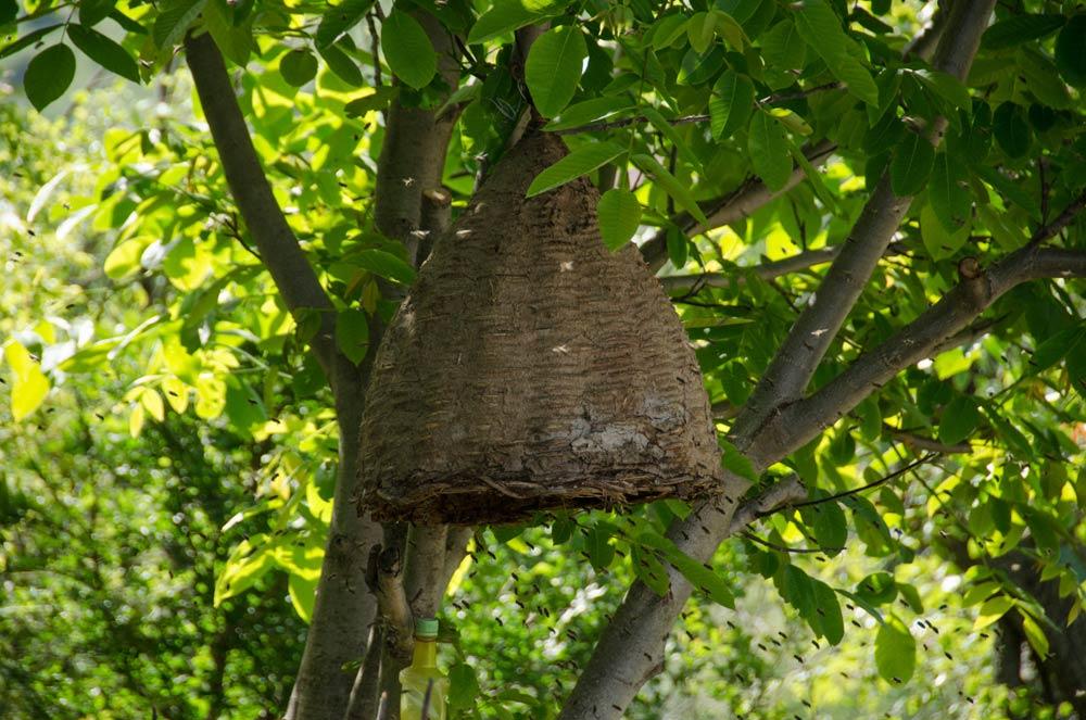 Traditional beekeeping in Mariovo