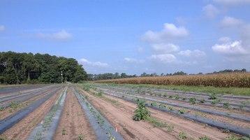 Henry Farm Conservation Easement