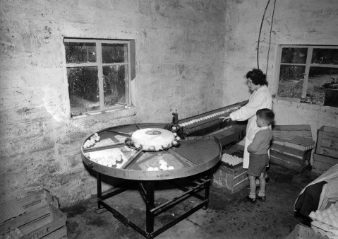 The delights of an egg-sorting machine, 12 September 1956