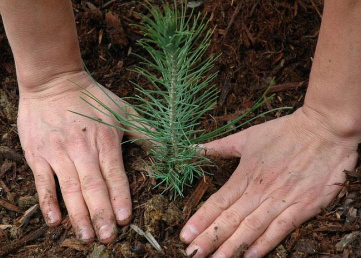 Service – Conservation Tree Program