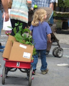 Child pulls red wagon at Farmer's Market.