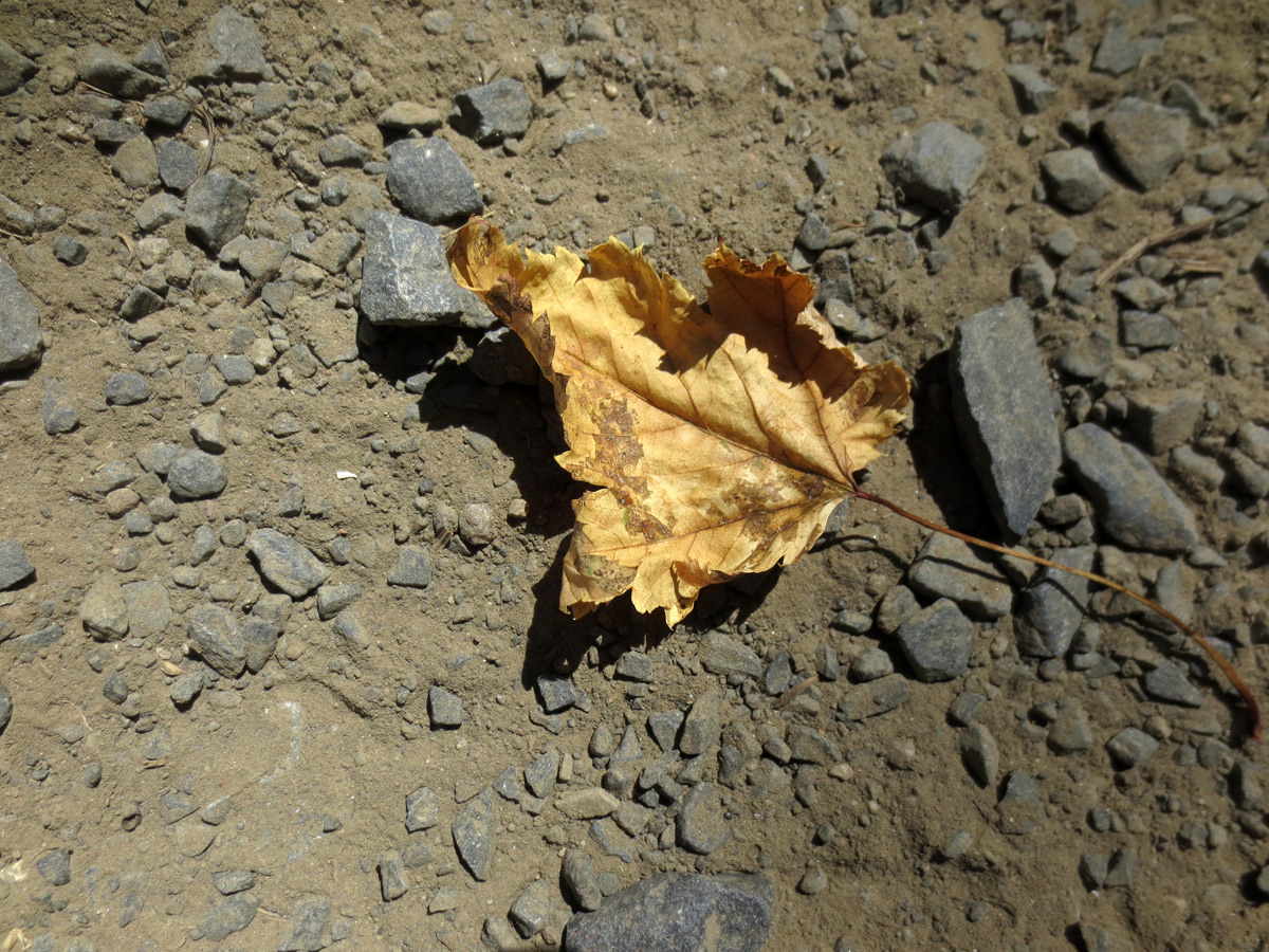 Leaf on barren soil.