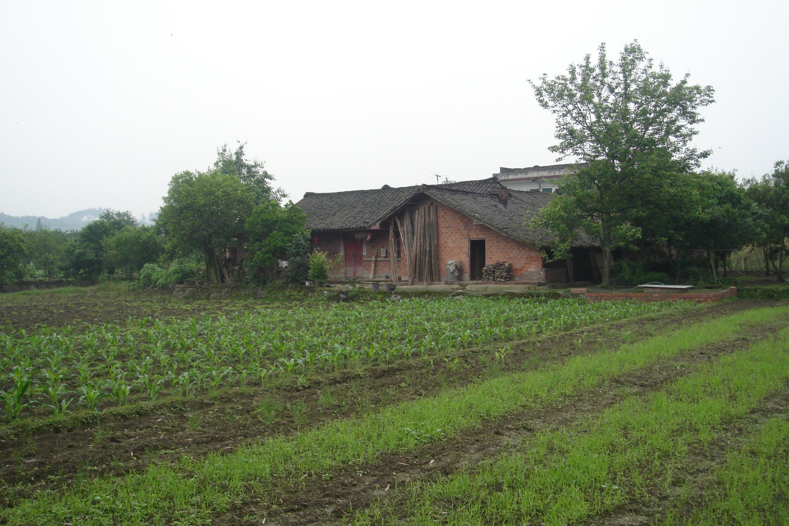yong-dsc056362