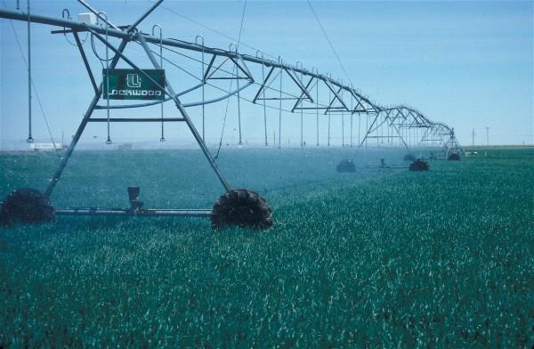 irrigation corn