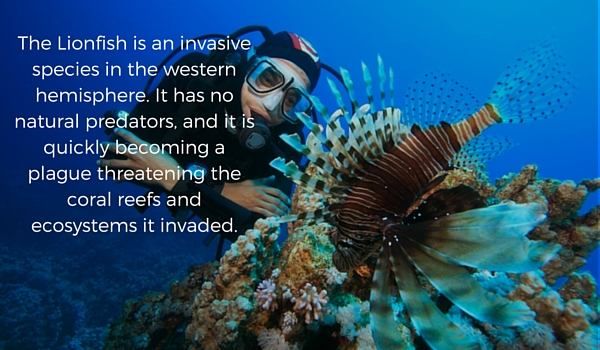 Lionfish_invasive_species