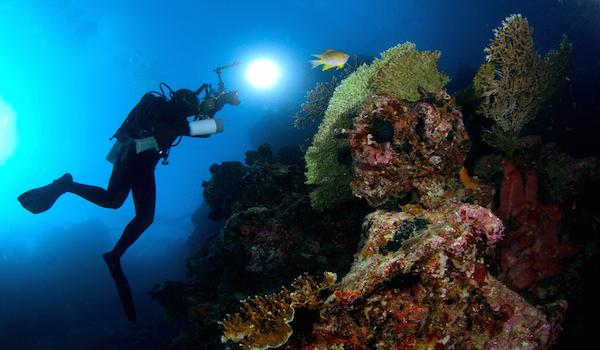 Scuba_diving_menjangan_island__bali