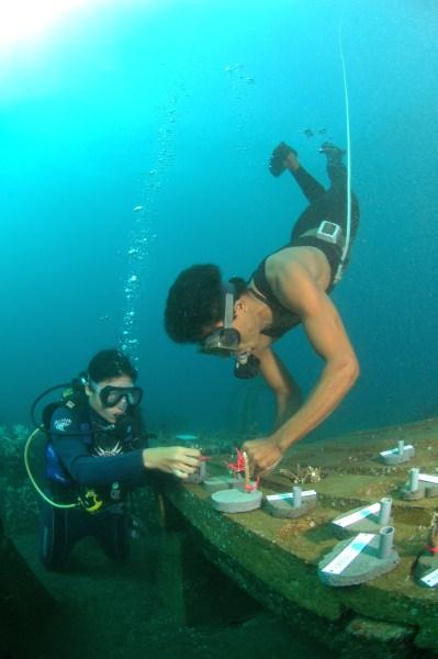 Building_reef