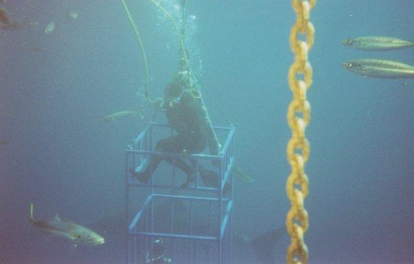 Cage_dive