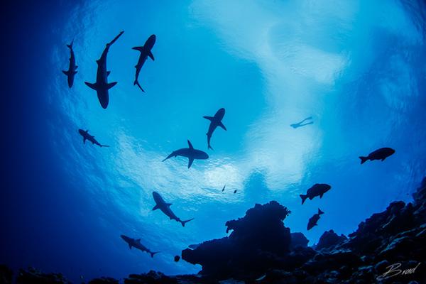 Shark_vertigo