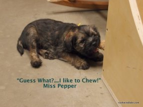 I love to chew!