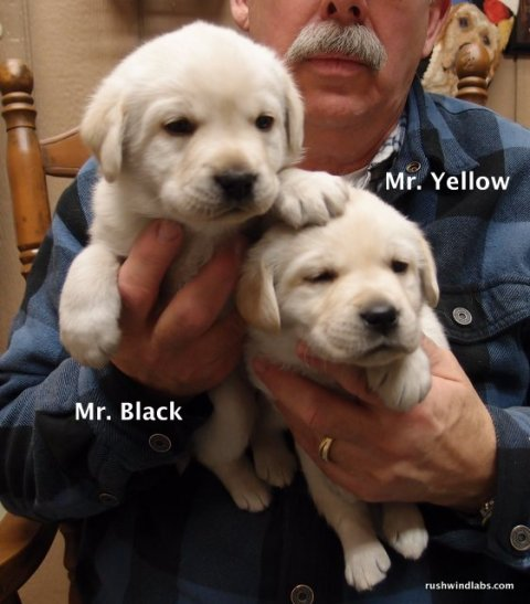 The Yellow Boys at 4 weeks