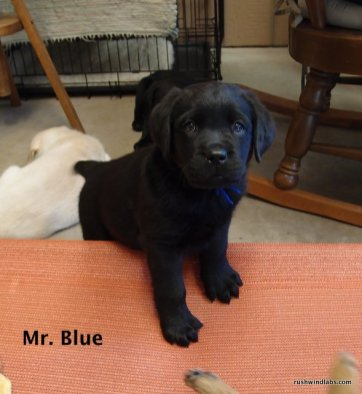Navy and Colten's Mr. Blue